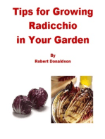 Tips for Growing Radicchio in Your Garden