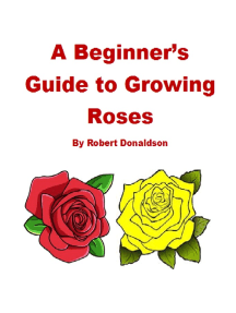 A Beginner's Guide to Growing Roses