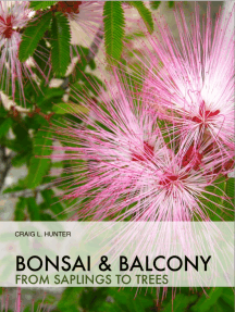 Bonsai and Balcony: from saplings to trees