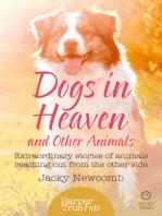 Dogs in Heaven