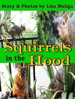 Squirrels in the Hood