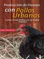 Producción de Huevos con Pollos Urbanos. Como Criar Pollos en su Patio Trasero