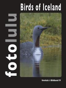 Birds of Iceland: fotolulu's Bildband 4