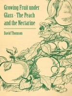 Growing Fruit Under Glass - The Peach and the Nectarine