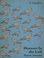 Diseases In The Loft - Pigeon Ailments.