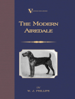 The Modern Airedale Terrier