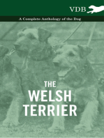 The Welsh Terrier - A Complete Anthology of the Dog