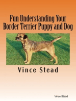 Fun Understanding Your Border Terrier Puppy and Dog