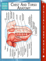 Chest And Torso Anatomy (Speedy Study Guide)