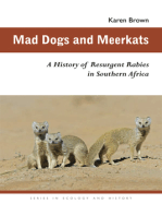 Mad Dogs and Meerkats