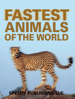 Fastest Animals Of The World