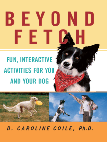 Beyond Fetch: Fun, Interactive Activities for You and Your Dog