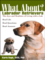 What About Labrador Retrievers