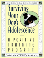 Surviving Your Dog's Adolescence