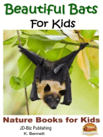 Beautiful Bats For Kids