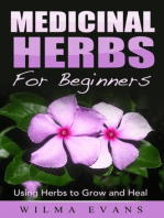 Medicinal Herbs For Beginners