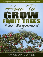 How To Grow Fruit Trees For Beginners