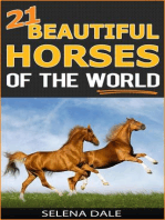 21 Beautiful Horses Of The World