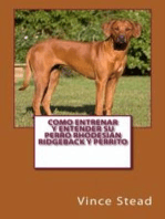 Como entrenar y entender su perro Rhodesian Ridgeback y perrito