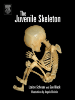 The Juvenile Skeleton