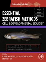 Essential Zebrafish Methods