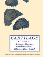 Cartilage V1