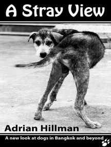 A Stray View - a new look at dogs in Bangkok and beyond