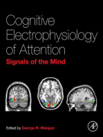 Cognitive Electrophysiology of Attention