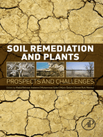 Soil Remediation and Plants