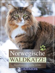 Norwegische Waldkatze: Skandinaviens sanfte Wilde