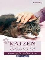 Katzen massieren