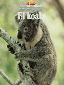 El koala