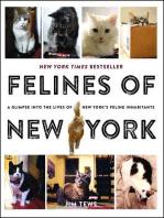 Felines of New York: A Glimpse Into the Lives of New York's Feline Inhabitants