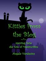 Kitties from the Blog (starring Evie)