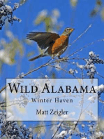 Wild Alabama