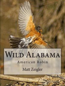 Wild Alabama: American Robin