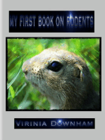 My First Book on Rodents
