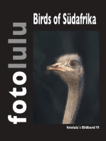 Birds of Südafrika