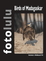 Birds of Madagaskar