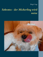 Sokrates - der Mickerling wird weise