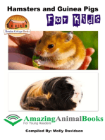 Hamsters and Guinea Pigs for Kids