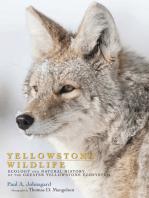 Yellowstone Wildlife