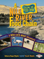 A Nile River Food Chain