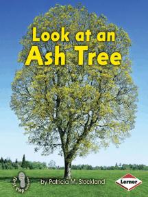 Look at an Ash Tree