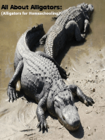 All About Alligators