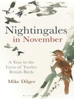 Nightingales in November