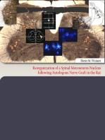 Reorganization of a Spinal Motoneuron Nucleus following Autologous Nerve Graft in the Rat