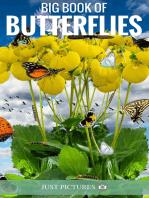 Big Book of Butterflies