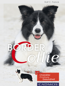 Border Collie: Charakter, Erziehung, Gesundheit.
