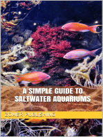 A Simple Guide to Saltwater Aquariums